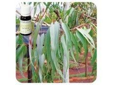 Aceite esencial Eucalipto Azul NAT Pranarom