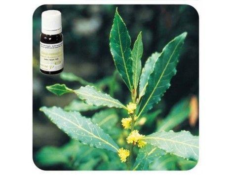 Aceite esencial Laurel NAT Pranarom