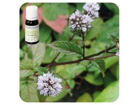 Aceite esencial Menta piperita NAT Pranarom