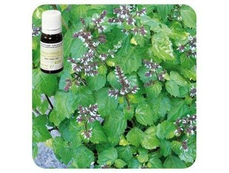 Aceite esencial Patchouli NAT Pranarom