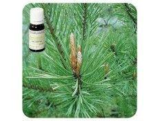 Aceite esencial Pino silvestre NAT Pranarom