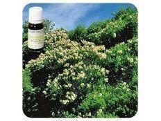 Aceite esencial Árbol del té NAT Pranarom