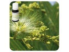 Aceite esencial Clavo de especias NAT Pranarom
