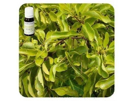 Aceite esencial de Sándalo Amarillo - Pranarom