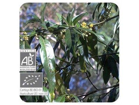 Aceite esencial Verbena exótica BIO Pranarom