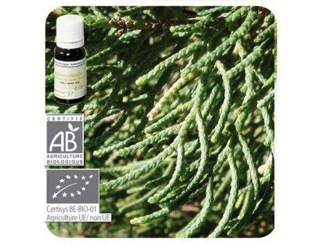 Aceite esencial Ciprés de Provenza BIO Pranarom