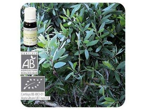 Aceite esencial Niaulí qt cineol BIO Pranarom