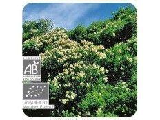 Aceite esencial Árbol del té BIO Pranarom