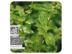 Aceite esencial Albahaca Exótica BIO Pranarom
