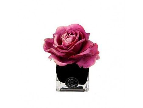 Difusor de aromas Rosa Fucsia en Cubo Negro Herve Gambs