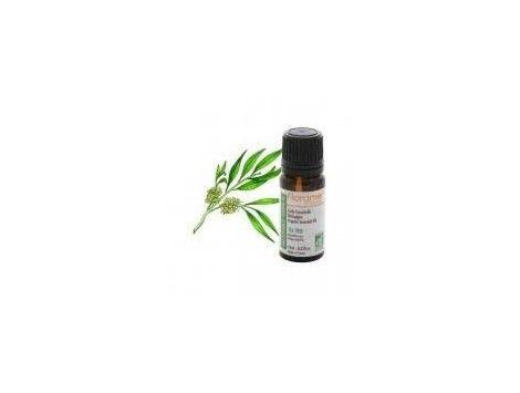 Aceite esencial Cajeput BIO- Florame